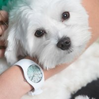 Zegarek damski ICE Watch ice-lo ICE.013426 - duże 6